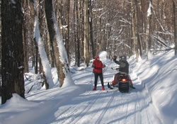Skier on the Trail